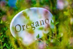 Fresh Oregano by ChristianThür Photography on Creative Market Label, Fresh, Creative, Photography, Photograph, Fotografie, Photoshoot, Fotografia