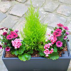 jardini re le marais a retrouver sur jardini res fleur en ville. Black Bedroom Furniture Sets. Home Design Ideas
