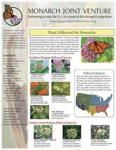 Milkweed Information Sheet