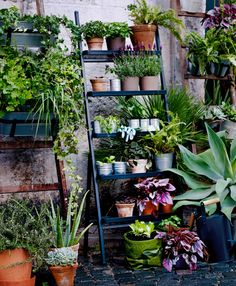 A plant stand in the shape of a ladder. Filled with plant pots in terracotta and galvanized steel and green plants.