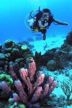 Diving in the BVI  #teenscubacamps, #scuba, teensailingcamps