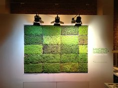 micro greens vertical garden system by harvest to home, huntington beach, ca