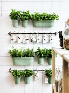 Herb wall! Photo: IKEA