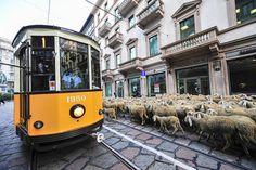 99 Reasons to Love Milan