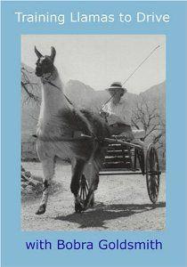 Amazon.com: Training Llamas to Drive to Cart: Movies & TV
