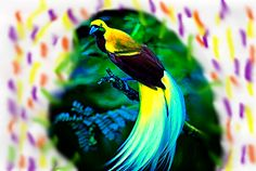 Here is another bird of paradise!!! anyone else feeling a bit obsessed with their pretty feathers?
