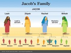 Jacob's family tree - and to remember the order.Remember Some Levis Jeans Do Not Get Any Included Zipper, Just Buttons Bible Scriptures, Bible Quotes, Quotes Quotes, Quick View Bible, Bibel Journal, Bible Knowledge, Scripture Study, Bible Stories, Bible Lessons