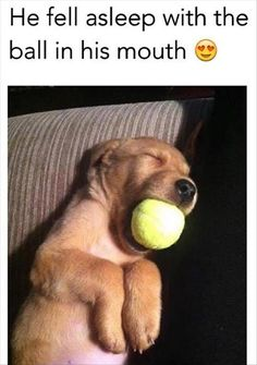 Funny+Animal+Pictures+Of+The+Day+-+21+Pics