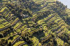 An amazing view of terraced vineyards along the Cinque Terre coast in Liguria. © iStockphoto/Thinkstock