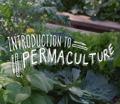Start where you are, use what you have, do what you can... Here's 27 life hacks for permaculture living that we've learned over the last 10 years, to make life better for everyone.