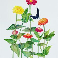 Zinnias watercolor work in progress Watercolor Ideas, Watercolour Painting, Floral Watercolor, Watercolors, Summer Painting, Zinnias, Plant Leaves, Lisa, Coloring