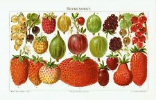 Berry fruit 1894 - Strawberry Raspberry Currant Gooseberry jam - antique print