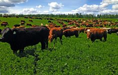 Year-round grazing systems
