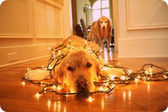 Love the Christmas light photos...since I have no kids I'm gonna try it with the dogs!