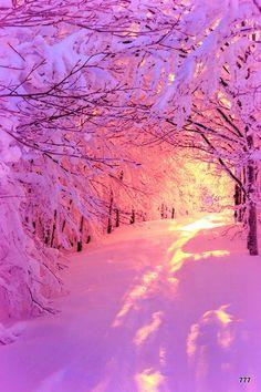 Lumière rose du soleil levant sur la forêt enneigée