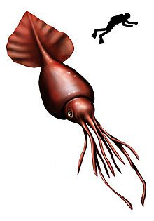 Not the giant squid... but the COLOSSAL squid. They both exist!