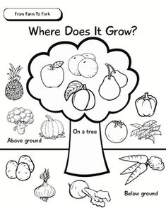 Unit Of Inquiry - Food Study - From Farm To Fork - Where Does It Grow?