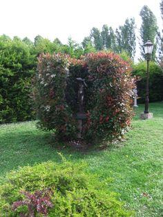 Una statua tra le foglie