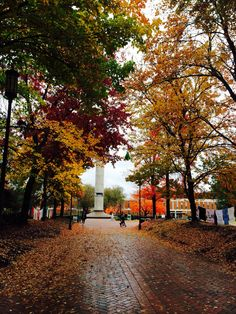 UNC Charlotte during the fall