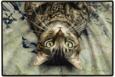 Choose from a wide variety of Tabby cat gifts, merchandise, and products from Animal Den. Perfect for tabby lovers of all ages. Pretty Cats, Beautiful Cats, Crazy Cat Lady, Crazy Cats, Munier, Cat Fabric, Cat Gifts, I Love Cats, Cat Art