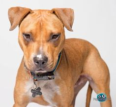 Dogs For Adoption - Maggie's Rescue