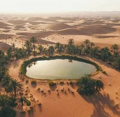 I found a little oasis in the middle of the desert ! Emirats Arabes Unis Abu Dhabi - Al Ain Road Desert Life, Desert Oasis, Seven Falls, Excursion, Fantasy Places, Belleza Natural, Abu Dhabi, Beautiful Landscapes, Wonders Of The World