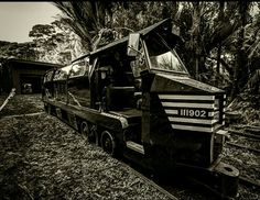 Rainforest Express by Slightly Pear Shaped