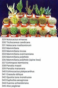 kaktüs isimleri