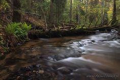 Roztoczański Park Narodowy, rezerwat Szum, Polska (Poland)