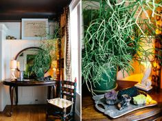 Heather & Dave's Eclectic Enclave; i want this plant!