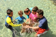 Dubai Atlantis Ray Feeding Experience  This program will allow guests the opportunity to hand feed Cow nose Rays (Rhinoptera javanica) in the shallow area of the Shark Tank, Aquaventure. It will involve both navigators and aquarists to share the experience. The program is time based.Please be advised that the Shark Safari and Ray Feeding experiences in Aquaventure Waterpark's Shark Lagoon are closed until further notice.Please be advised that the Shark Safari and Ray Feeding e...