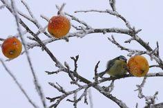 Magen-Darm-Probleme: Liegt's vielleicht am Obst? - SPIEGEL ONLINE - Gesundheit