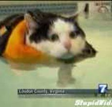 Anchor Can't Stop Laughing at Fat Cat | Watch the video - Yahoo! Screen