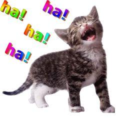 1b15c9a1 Minion Jokes, Cartoon Jokes, Cartoon Pics, Funny Cartoons, Funny Jokes, Funny Animal Pictures, Funny Photos, Funny Animals, Cute Gif