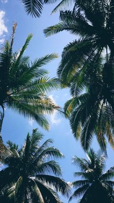 My fave view ever Wallpaper Art, Makeup Wallpapers, Summer Breeze, Art Ideas, Decoration, Tropical, Backyard, Palm Trees, Beach