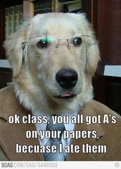 #funny #dog If I had a dollar for every time I had to give that speech... I'd have 3 dollars.