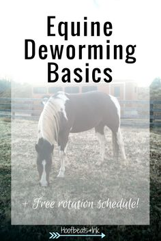 Stay on top of your horse's deworming schedule with this free rotational chart.