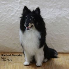 Needle felted super realistic sheltie Coo