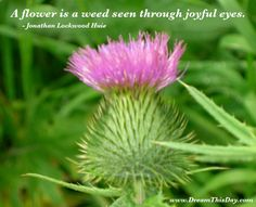 A flower is a weed seen through joyful eyes. - Jonathan Lockwood Huie