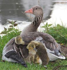 Busy mom!