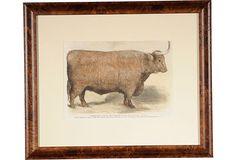 19th-C. Framed Steer Engraving