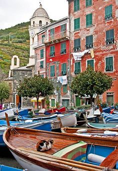 A cat on Vernazza wa