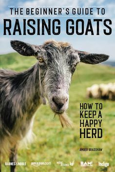 With over 200+ goat breeds, your choices can be a little overwhelming. Let us help you pick the best goat breed for you and your homestead.   #goats #dairygoats #meatgoats #fibergoats #livestock #homestead Goats For Sale, Raising Goats, Raising Chickens, Boer Goats, Nigerian Dwarf Goats, Farm Kids, Goat Farming, Book Club Books, Audio Books