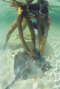 Gently touch the stingray at Dolphin Cove, Jamaica. So much fun!  Jag absolutely loved swimming with the ray!!!