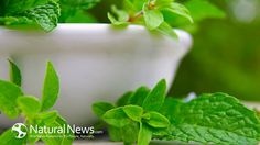 Oregano – The Powerful Bacteria-Killing Herb That With the Highest Known Source of Antioxidants