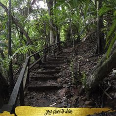 From it's natural reserves, discover Panama.   www.lasamericasgoldentower.com