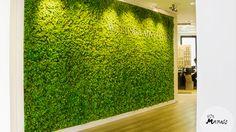 Midden in Amsterdam in een advocatenkantoor hangt een complete groene moswand van Mr. Moss