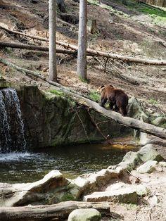 Bären Wildpark Schwarze Berge Hamburg | GourmetGuerilla.de