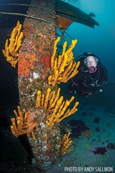 Best Scuba Diving Gear for Wreck Diving