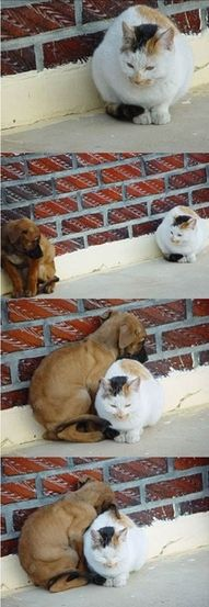 Two lonely animals find comfort together.